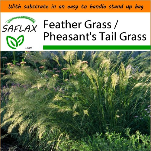 SAFLAX Garden in the Bag - Feather Grass / Pheasant's Tail Grass - Stipa - 50 seeds
