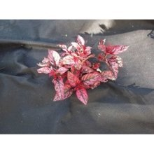 Yuzet® Weed Control Fabric | 2m Wide Ground Cover
