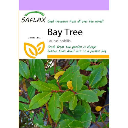 Saflax  - Bay Tree - Laurus Nobilis - 6 Seeds