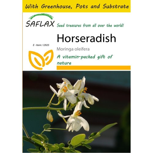 Saflax Potting Set - Horseradish - Moringa Oleifera - 10 Seeds - with Mini Greenhouse, Potting Substrate and 2 Pots