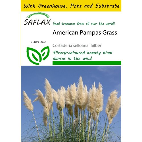 Saflax Potting Set - American Pampas Grass - Cortaderia Selloana `silber` - 200 Seeds - with Mini Greenhouse, Potting Substrate and 2 Pots