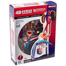 Famemaster 4D-Vision Human Male Reproductive Anatomy Model