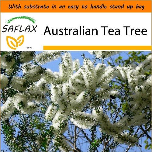 SAFLAX Garden in the Bag - Australian Tea Tree - Melaleuca - 400 seeds