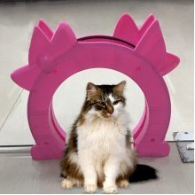 Cat Kitty Door Pass Interior Cat Door