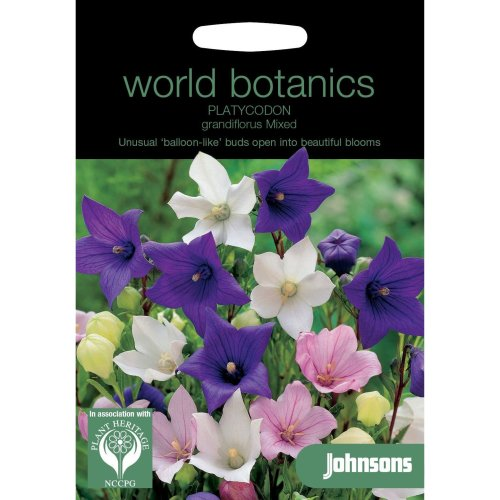 Johnsons World Botanics Flower - Pictorial Pack - Platycodon grandiflorus Mixed - 200 Seeds