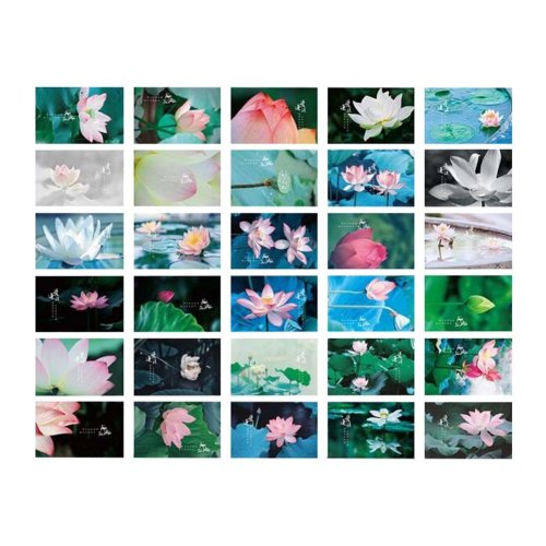 Ideal for Collectors Lotus Flowers Postcards 30pcs Post Card