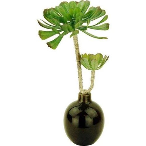 Designs by Lauren 16G24G 15 in. Duo Succulents in a Ceramic Vase