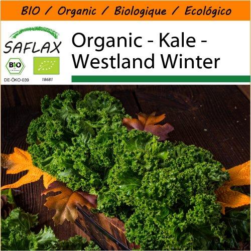 SAFLAX Garden in the Bag - Organic - Kale - Westland Winter - 70 certified organic seeds  - Brassica