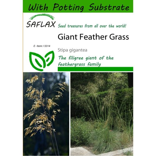 Saflax  - Giant Feather Grass - Stipa Gigantea - 10 Seeds - with Potting Substrate for Better Cultivation