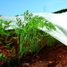 Nonwoven Crop & Plant Cover - Frost Protection - Insect Netting - 1.6m X 5m