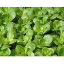 Salad - Purslane - Golden - 2500 Seeds