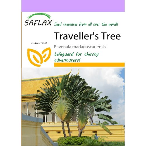 Saflax  - Traveller's Tree - Ravenala Madagascariensis - 8 Seeds